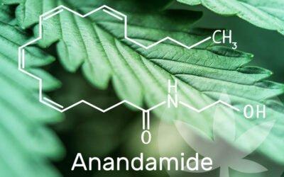 Vad är Anandamid?