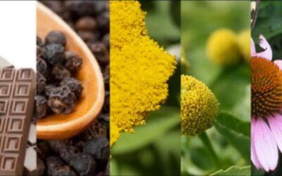 Växter som innehåller cannabinoider